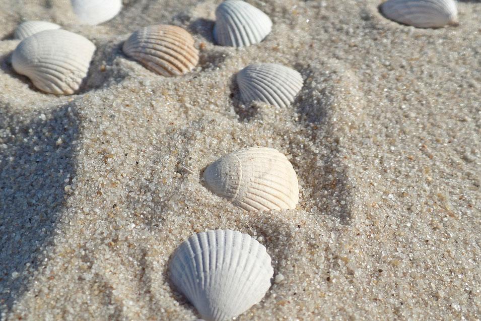 Muscheln-Strand